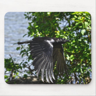 Flying Raven in Sunlight Wildlife Photo Mouse Pad