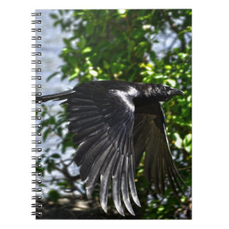 Flying Raven in Sunlight Wildlife Photo Notebook