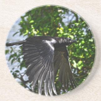 Flying Raven in Sunlight Wildlife Photo Sandstone Coaster