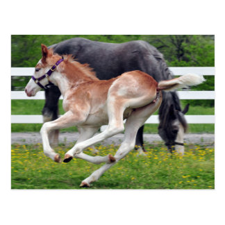 Flying Red Roan Colt Postcard