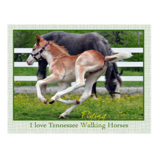 Flying Red Roan Postcard
