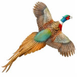 "Flying Ringneck Pheasant Ornament<br><div class=""desc"">Original fine art design of a flying Ringneck pheasant by designer Carolyn McFann of Two Purring Cats Studio on a quality holiday ornament for bird lovers. 