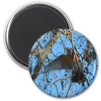 Flying Robin 2 Inch Round Magnet