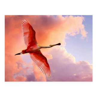 Flying Roseate spoonbill Postcard