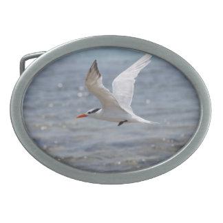 Flying Royal Tern Oval Belt Buckle