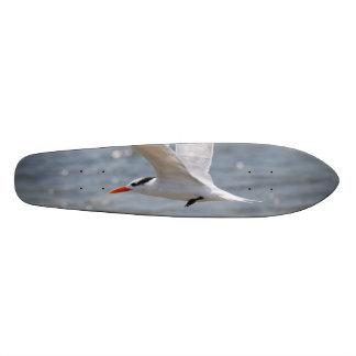 Flying Royal Tern Skateboard Deck