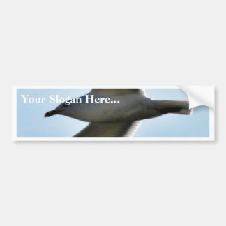 Flying Seagull Close Up Bumper Stickers