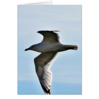 Flying Seagull Close Up Greeting Card