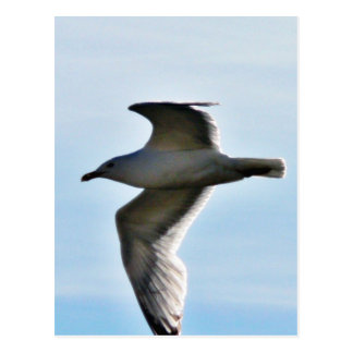 Flying Seagull Close Up Postcard