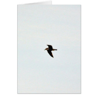 Flying Seagull High Greeting Card