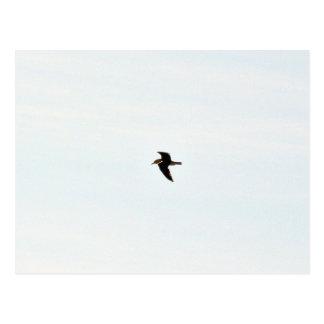 Flying Seagull High Postcard
