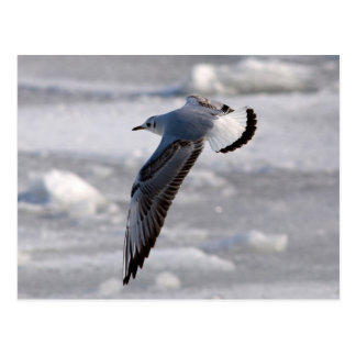 Flying seagull in winter postcard