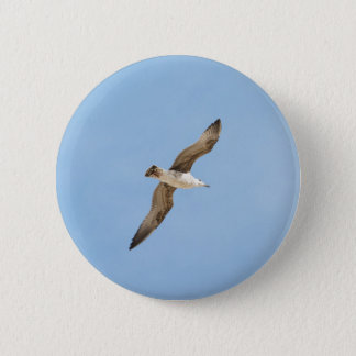 Flying seagull pinback button