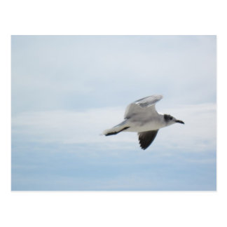 Flying Seagull Postcard