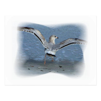 Flying seagull posterized postcard