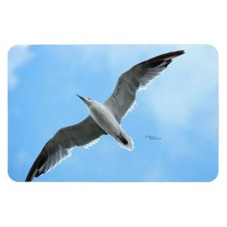 Flying seagull Premium Flexi Magnet