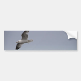 Flying Seagull Soaring Bumper Sticker