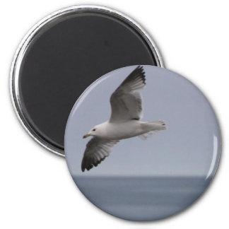 Flying Seagull Soaring Magnet