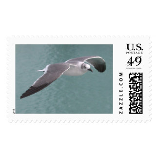 Flying Seagull Stamp