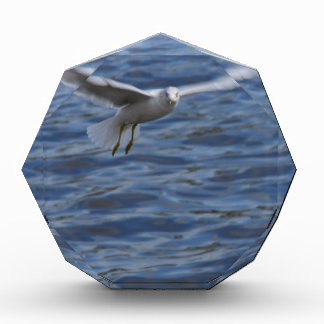 Flying seagull wanting to get attention acrylic award