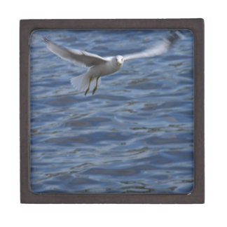 Flying seagull wanting to get attention gift box