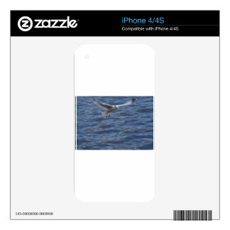 Flying seagull wanting to get attention iPhone 4 decals