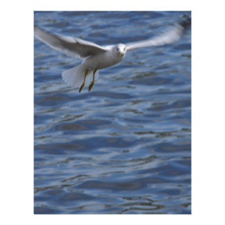 Flying seagull wanting to get attention letterhead