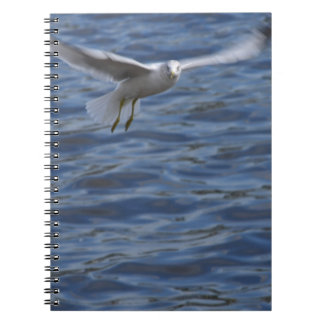 Flying seagull wanting to get attention journals