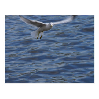 Flying seagull wanting to get attention postcard