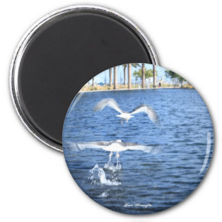 Flying Seagulls Magnet
