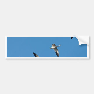 Flying Snow Geese Bumper Sticker