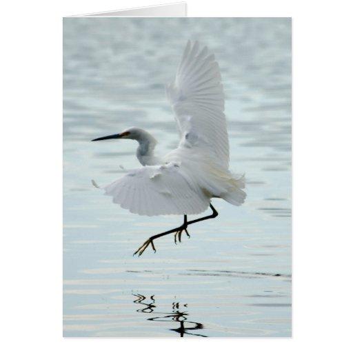 Flying Snowy Egret Greeting Card