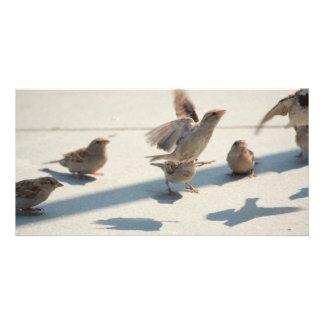 flying sparrows custom photo card