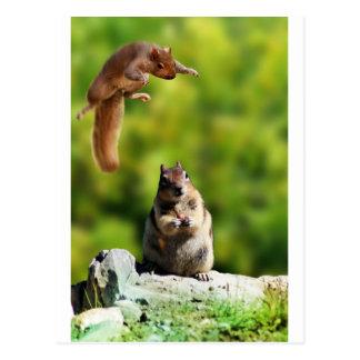 Flying squirrel postcard
