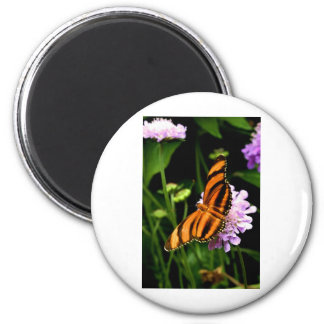 Flying Tiger Butterfly Magnet