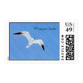 Flying Western Grebe Postage