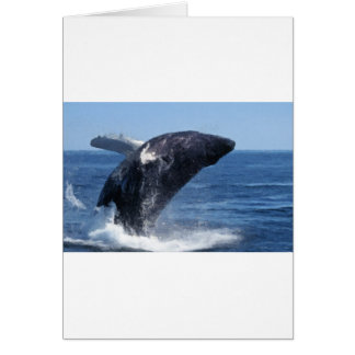 Flying Whale Card