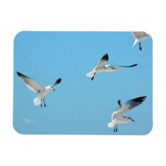 Flying white seagulls Flexi Magnet