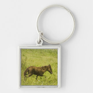 Foal (11) Silver-Colored square keychain