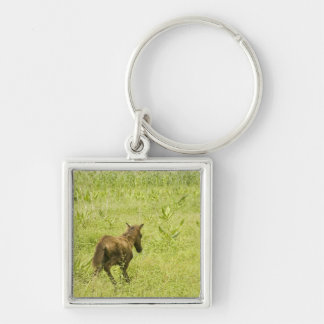 Foal (12) Silver-Colored square keychain