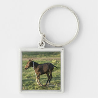 Foal (13) Silver-Colored square keychain