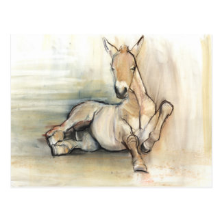 Foal 2012 postcard