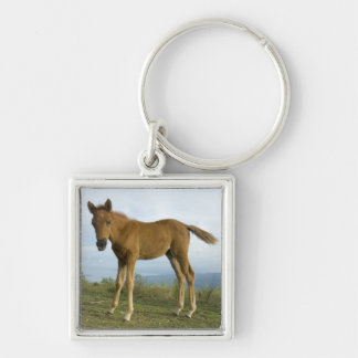Foal (2) Silver-Colored square keychain