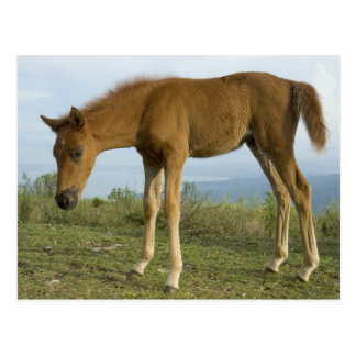 Foal 3 post cards