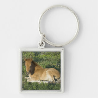 Foal (6) Silver-Colored square keychain