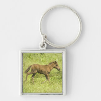 Foal (7) Silver-Colored square keychain