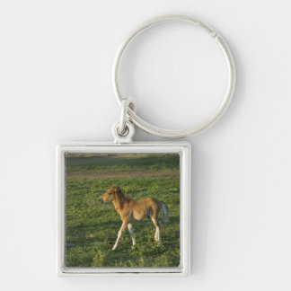 Foal (8) Silver-Colored square keychain