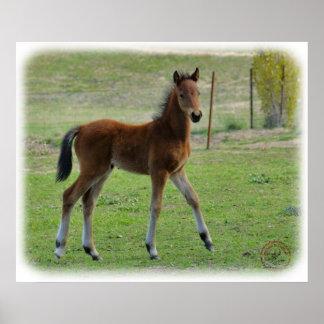 Foal 9P030D-197 Poster