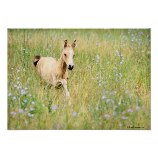 Foal and Flowers Poster