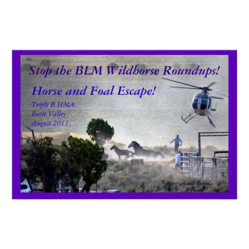 Foal and Horse Escape the BLM Roundup Print